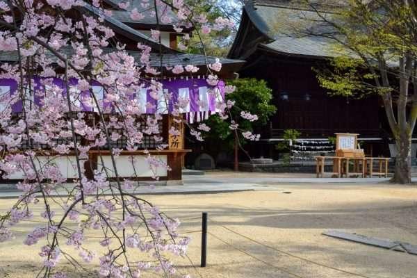 Sakura at Temple in Matsumoto Japan