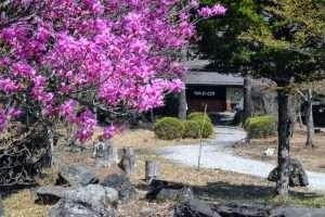 Soba School in Yamanashi