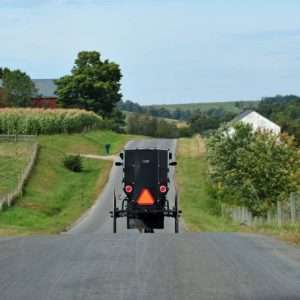 Amish Buggy on Road